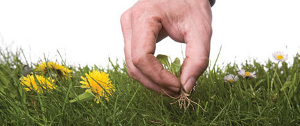 Late Summer and Fall Lawn Care | The Miracle of Fall | Scoop.it