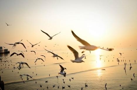 Préservons la biodiversité pour garder la santé ! | Biodiversité & Relations Homme - Nature - Environnement : Un Scoop.it du Muséum de Toulouse | Scoop.it