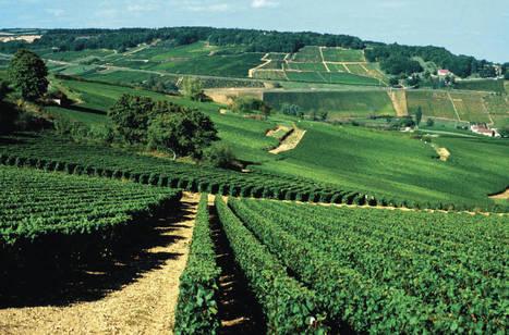 Une nouvelle école du vin en Bourgogne: quand le savoir faire ... - Le Monde | le Vin : de la stratégie à la communication | Scoop.it