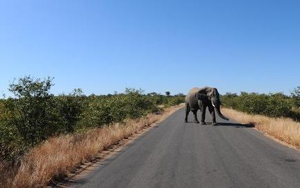 Elephant put down after attacking tourists in S.Africa - Phys.org | Practice | Scoop.it