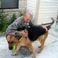 German Shepherd Fetches Ball, Returns to Find His Soldier Home | Animal Health | Scoop.it