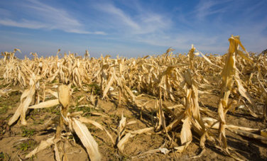 Scary Facts About Food Security & Climate Change + Infographics | URBAN GARDEN | Scoop.it