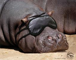 Revue de zoo | Communication & Tourisme | Scoop.it