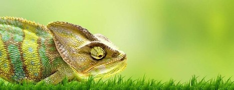 Chameleon Facts about Camouflage | Tech and Facts | Scoop.it
