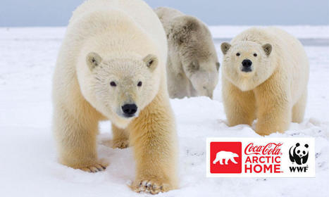 WWF and The Coca-Cola Company Team Up to Protect Polar Bears   Projects   WWF   Habitats   Scoop.it