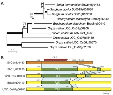 Science: Horizontal Gene Transfer by the Parasitic Plant Striga hermonthica (2010) | Plants and Microbes | Scoop.it