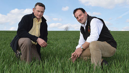 UK: Wheat battles disease in the wetter west | Wheat | Scoop.it