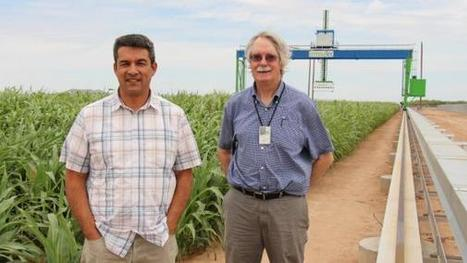 World's largest crop robot revolutionizing crop breeding | CALS in the News | Scoop.it