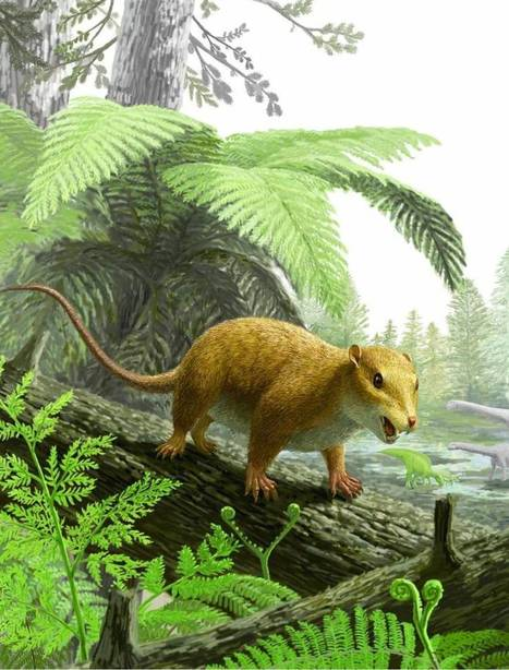 Fossilized mammal skeleton from the dinosaur era found in central Japan | Dernières  nouvelles | Scoop.it