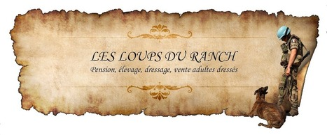 Elevage Berger Belge Malinois et Westies- Dressage - Pension , Les loups du Ranch, St-Sylvain-d'Anjou, Angers, #LesLoupsDuRanch.com   Cnet-informatique.com   Scoop.it