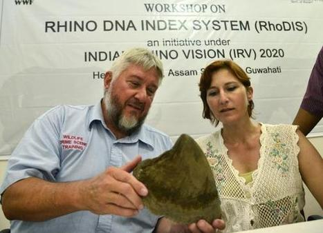 DNA-based tool: SA experts help India stop poaching | Wildlife Trafficking: Who Does it? Allows it? | Scoop.it