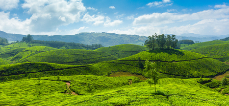 Monsoon in Munnar – in the nature's lap | | Hotel | Scoop.it