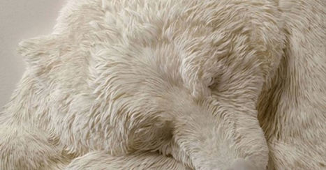 It Looks Like A Sleeping Bear. But When The Camera Pans Out? SPEECHLESS | Poetry for inspiration | Scoop.it