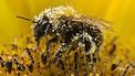 UE: sin acuerdo para prohibir pesticidas - BBC Mundo - Últimas Noticias | Seguridad Alimentaria - YoComproSano | Scoop.it