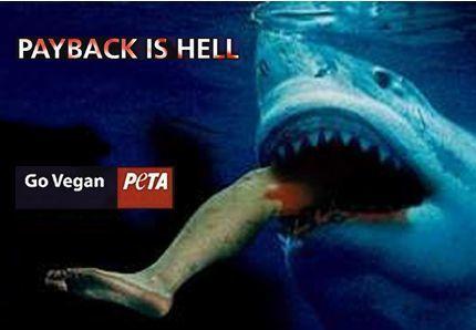 A requin, requin et demi | Mais n'importe quoi ! | Scoop.it