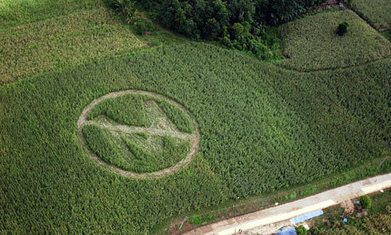 Monsanto sued small famers to protect seed patents | Questions de développement ... | Scoop.it