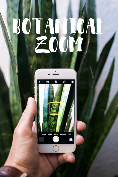 Urban Jungle Bloggers: Botanical Zoom · Happy Interior Blog | Interior Design & Decoration | Scoop.it
