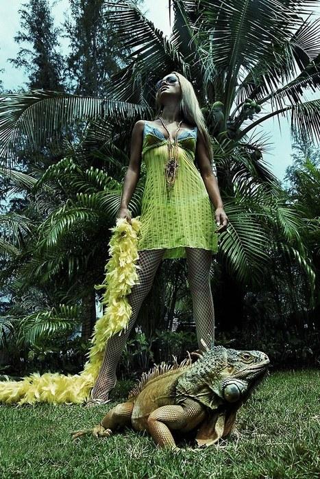 Iguana | Okapy | Scoop.it