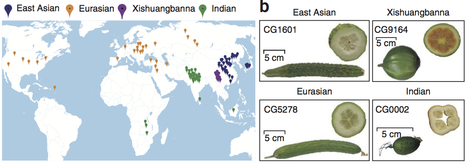 Nature Genetics: A genomic variation map provides insights into the genetic basis of cucumber domestication and diversity (2013) | sudhir | Scoop.it