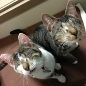 Bacon and Eggs, Two Blind Cats, Find Home Together - Love Meow   Cats   Scoop.it