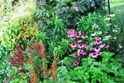 Mon jardin | potager urbain | Scoop.it
