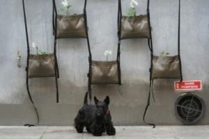Bacsac, des jardinières geotextiles design adaptées au jardinage urbain! | Le Gardenbazar | Scoop.it