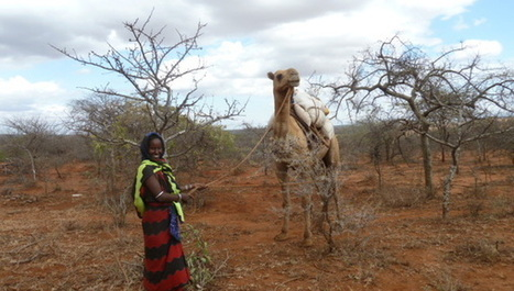 Major boost for climate change resilience in Africa - SciDev.Net Sub-Saharan Africa | CGIAR Climate in the News | Scoop.it