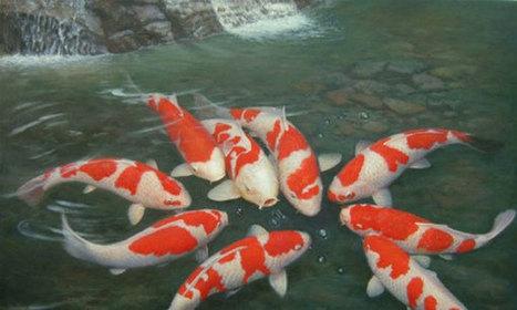HCM City casts a bigger net for ornamental fish market   Aquaculture Directory   Scoop.it