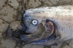 Hallan criatura marina de 5,5 metros | Reflejos | Scoop.it