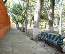 Talarán 20 árboles secos - El Sol de Leon (OEM)   Ecología Urbana   Scoop.it