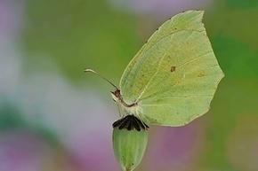 2014, une année à papillons ? | pour mon jardin | Scoop.it