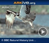 Free Technology for Teachers: Arkive - Great Videos, Images, and Lesson Plans About Animals and Plants | Teaching and Tech | Scoop.it