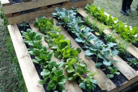 La permacultura es devolver a la tierra lo que hemos tomado de ella ... - En Positivo | Ecología y Sostenibilidad | Scoop.it