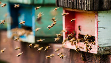 Where is the best place to put a beehive? #Bees | Music | Scoop.it