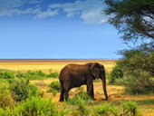 Gorilla Tracking and Trekking in Uganda, African Safari Holidays | Places and Nature | Scoop.it