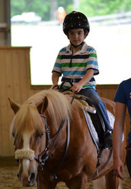 Miracle Workers: What It Takes to Be a Therapy Horse | Terapias con animales en niños con TEA | Scoop.it