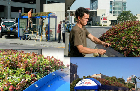 NFTA Bus Shelter Gets A Living Green Roof | Sustainable Urban Agriculture | Scoop.it