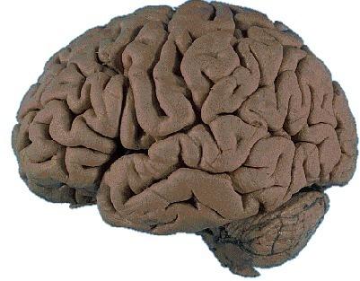 Stress e depressione rimpiccioliscono il cervello | Neurospicologia | Scoop.it