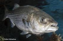Texas Freshwater Stamp Raises $60 Million for Conservation in 10 Years : The Fishing Wire | Texas Stream Team | Scoop.it