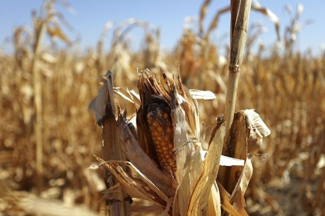 Cash Crops: Farmland Could Be the New Gold | International Business Development | Scoop.it