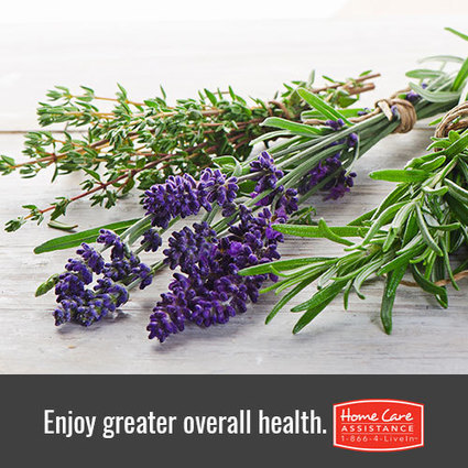Herbs that will help your senior's immune system | Home Care Assistance of Scottsdale | Scoop.it