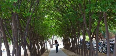 UA Earns 2013 Tree Campus USA Designation | UANews | CALS in the News | Scoop.it