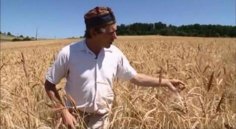 Un boulanger bio explique pourquoi le blé et le gluten sont devenus toxiques | Toxique, soyons vigilant ! | Scoop.it