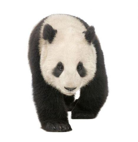 Your Google Algorithm Cheat Sheet: Panda, Penguin, and Hummingbird | Public Relations | Scoop.it