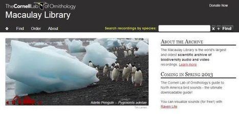 Publicada en Internet la mayor colección de sonidos de animales | Recull diari | Scoop.it