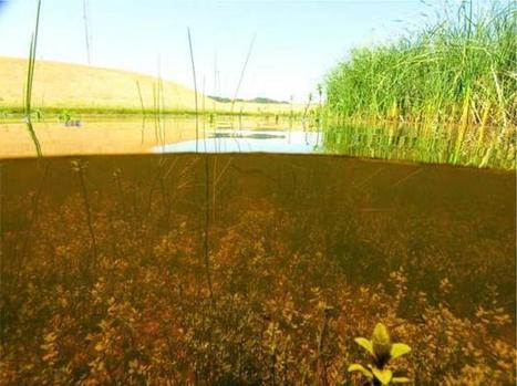 Ponds and Lakes: A Journey Through the Life Aquatic | Learn Science at Scitable | Lakes and Ponds | Scoop.it