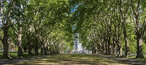 Australie : des adresses e-mails pour les arbres ! | Geeks | Scoop.it