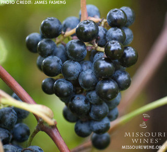 » 10 Things You Probably Didn't Know About Missouri Wines   After Retirement   Scoop.it