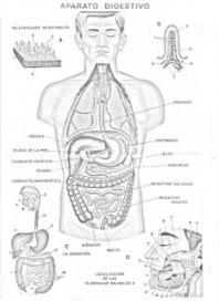 COLOREA TUS DIBUJOS: Lamina del Aparato Digestivo para ... | Sistema Digestivo de la Prof: Wanda E. Astacio | Scoop.it