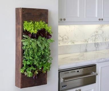 How to Freshen your Kitchen with Green Plants   Garden Designer   Scoop.it